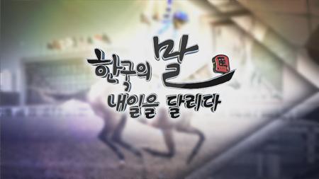 [스페셜] 한국의 말, 내일을 달리다 3부: 제주, 명마를 키운다