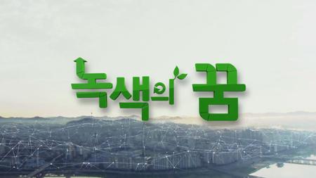 [녹색의 꿈] - 바다 사막화의 주범, 보라성게
