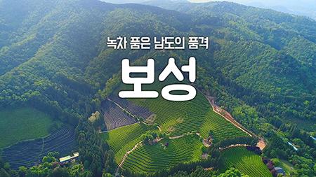 [구석구석 코리아] - 녹차 품은 남도의 품격, 보성