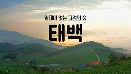 [구석구석 코리아] - 열대야 없는 고원의 숲, 태백
